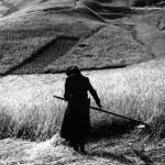 Sappada (1961)