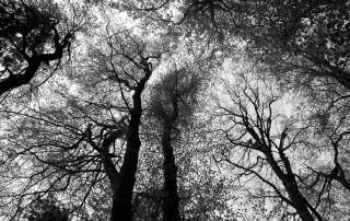 Foresta del CasentinoBNrid